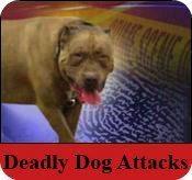 fatal dog attack expert
