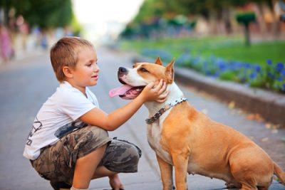 Dog bites child expert