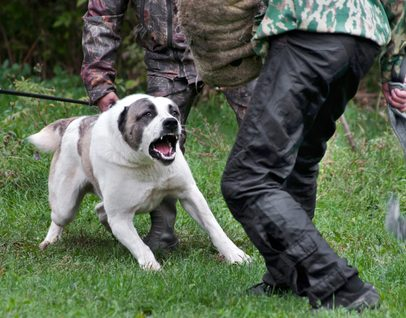 Did the victim provoke the dog-