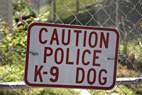 police canine expert
